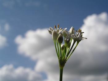 flower-2666395_1280.jpg